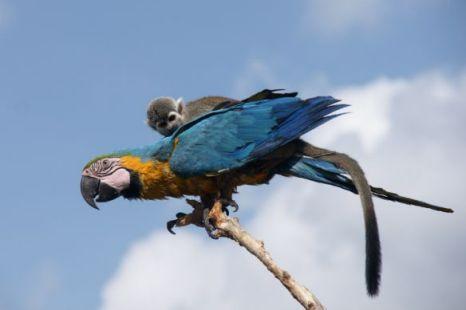 monkey_on_bird-02.jpg