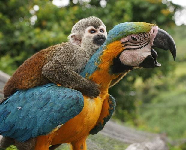monkey_on_bird.jpg